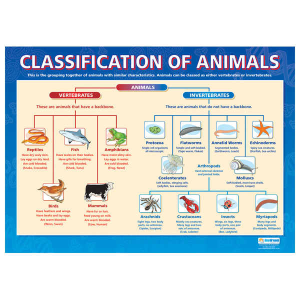 The Animal Kingdom Classification Chart